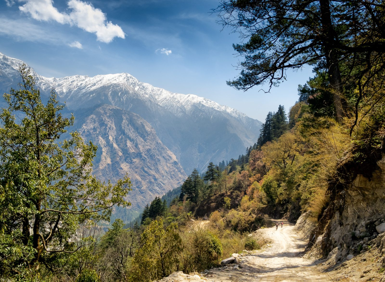 Himalayan Peaks and Alpine Forests